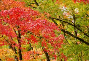 長安寺の紅葉
