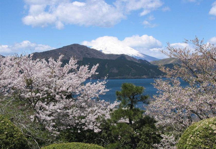 芦ノ湖と桜